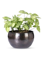 Textured Iron U-shape Planter - Magnolia Kreations