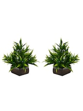 Thefancymart Artificial Bamboo Leaves Plant (size 7.5 Inchs/ 20 Cms) With Wood Hexagun Pot ( Set Of 2 Pots)-S20235-889 - By