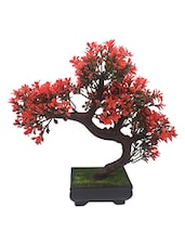Random Bent Bonsai Tree with Small Red Leaves -  online shopping for Indoor Plants