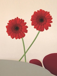 Red Gerberas Wall Sticker - Freelance