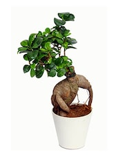 White Natural Plants & Fibre Pots Planter - By