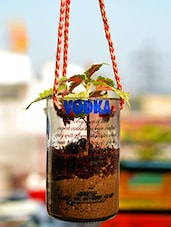 Up Cycled Absolute Vodka Bottle Hanging Planter - Kavi The Poetry Art Project