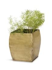 Brass Frustum Shape Planter - Magnolia Kreations