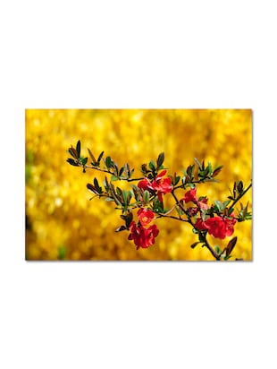 Multicolored  Matte Finish Paper Colorful Flowers Poster