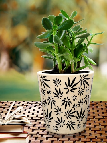Pots Planters Upto 60 Off Buy Pots Platers For Indoor
