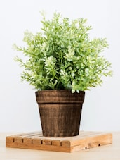 Pots Planters Online - Buy Designer, Hanging Planter in India on wooden bollards, wooden bookends, wooden plows, wooden pedestals, wooden decking, wooden bird houses, wooden troughs, wooden home, wooden garden, wooden trellis, wooden toys, wooden arbors, wooden bird feeders, wooden rakes, wooden greenhouses, wooden plates, wooden bells, wooden benches, wooden chairs, wooden pavers,