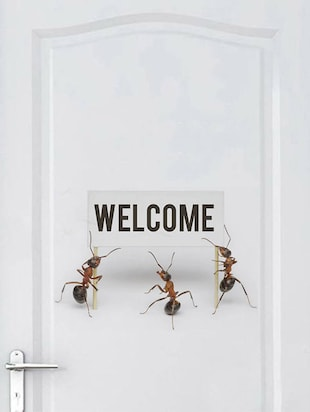 Rawpockets Wall Decals ' Welcome by Ants '  Wall stickers (PVC Vinyl) Multicolour - 15733896 - Standard Image - 2