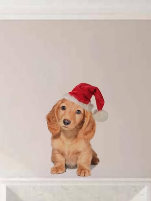 Rawpockets Wall Decals ' Dog with Christmas Cap '  Wall stickers (PVC Vinyl) Multicolour - 15733903 - Standard Image - 2