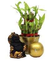 Lucky Bamboo Plant, Laughing Buddha And Candle Gift Set - Gifts By Meeta